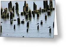 The Sea Gulls Greeting Card