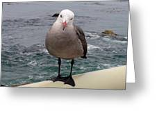 The Seagull 2 Greeting Card