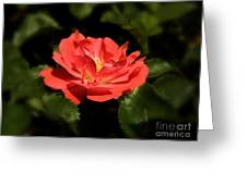 The Secret Rose Greeting Card