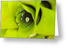 The Secret World In A Bromeliad Greeting Card by Karon Melillo DeVega