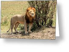 King Of The Savannah Greeting Card