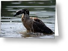 The Shake Off - Canadian Goose Greeting Card