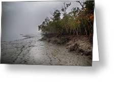 The Shining Mangrove Greeting Card by Kingshuk Mondal