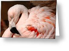 The Shy Flamingo Greeting Card
