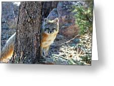 The Shy Fox Greeting Card