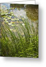 The Side Of The Lily Pond Greeting Card