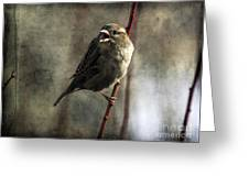 The Singing Sparrow Greeting Card