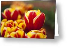 The Single Big Tulip Greeting Card