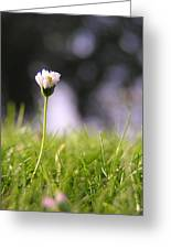 The Single Flower Greeting Card