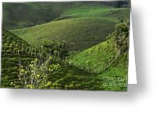 The Soft Hills Of Caizan Greeting Card