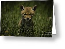 The Softer Side Of Nature Greeting Card