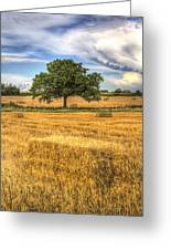The Solitary Farm Tree Greeting Card