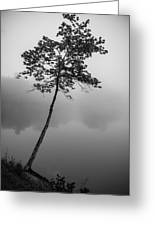 The Solitary Tree Greeting Card