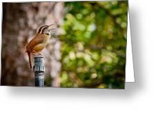 The Songbird Greeting Card