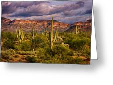 The Sonoran Golden Hour  Greeting Card