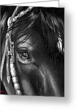 the Soul of a Horse Greeting Card