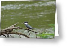 The Southern Kingfisher Side View Greeting Card