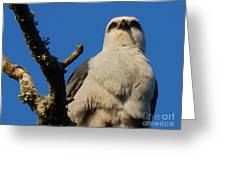 New Orleans  Southern Osprey Greeting Card