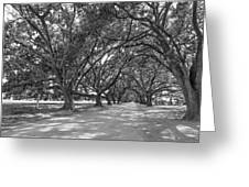 The Southern Way Bw Greeting Card
