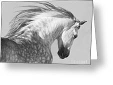 The Spanish Stallion Tosses His Head Greeting Card