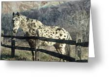 The Speckled Horse Greeting Card