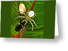 The Spider And The Fly  Greeting Card
