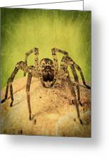 The Spider Series X Greeting Card