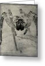 The Spider Series Xii Greeting Card
