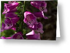 The Splendor Of Foxgloves Greeting Card