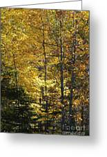 The Splendor Of Yellow   Greeting Card