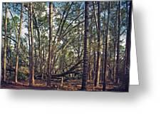 The Split Oak. Greeting Card