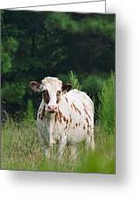 The Spotted Cow Greeting Card