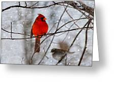 Blue Eyes In The Snow Cardinal  Greeting Card