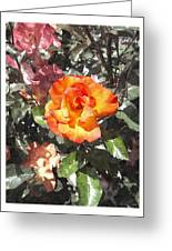 The Spring Rose Greeting Card