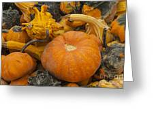 The Squash Harvest Greeting Card