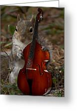 The Squirrel And His Double Bass Greeting Card