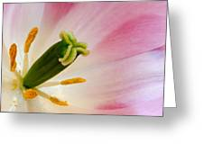 The Stamen Greeting Card