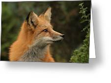The Stare Greeting Card