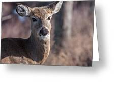 The Stare Down Greeting Card