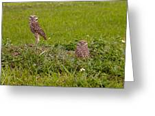 The Stares Of The Burrowing Owls Greeting Card