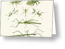 The Stick Insect Greeting Card