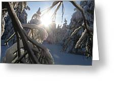 The Sun Through Snowy Branches Greeting Card