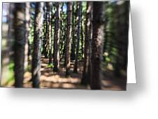 The Surreal Forest Greeting Card