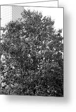 The Survivor Tree In Black And White Greeting Card