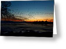 The Swarm Greeting Card by Matt Molloy