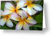 The Sweet Fragrance Of Plumeria Greeting Card by Pamela Winders