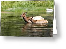 The Swim Greeting Card