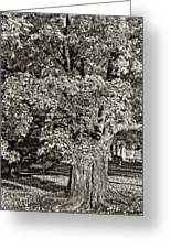 The Swinging Tree Sepia Greeting Card