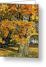 The Swinging Tree Greeting Card