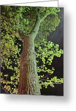 The Tall Trees Watch Greeting Card